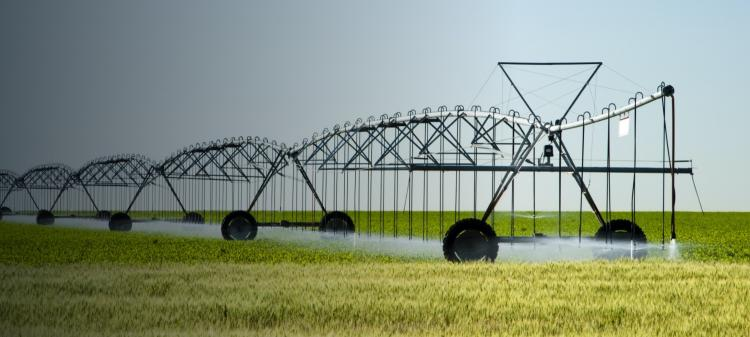A center pivot irrigation system in a corn fieldwith a wheat field in the foreground; Texas, USA
